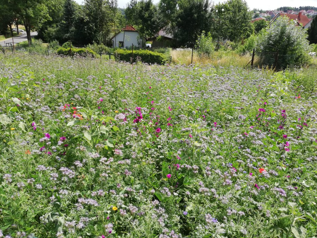 Blühfläche für mehr Arten- und Insektenvielfalt im Projekt Grüngitter